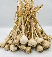 Garlic (kg)