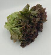 Red Lollo Lettuce