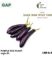 Purple Egg Plant