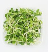 Organic Sunflower Microgreen