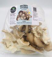 Organic Brown Oyster Mushroom