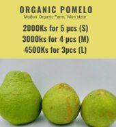 Organic Pomelo From Mudon Organic Farm