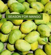 Natural Mango ( Sein Ta Lone)