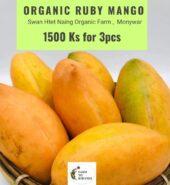 Organic Ruby Mango From Swan Htet Naing Organic Farm(Monywa)-1Pcs