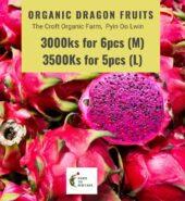 Organic Dragon Fruit From The Croft Organic Farm
