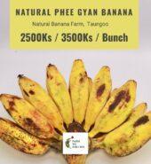 Taungoo Natural Phee Gyan Banana