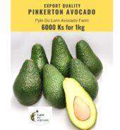 Export Quality Pinkerton Avocado